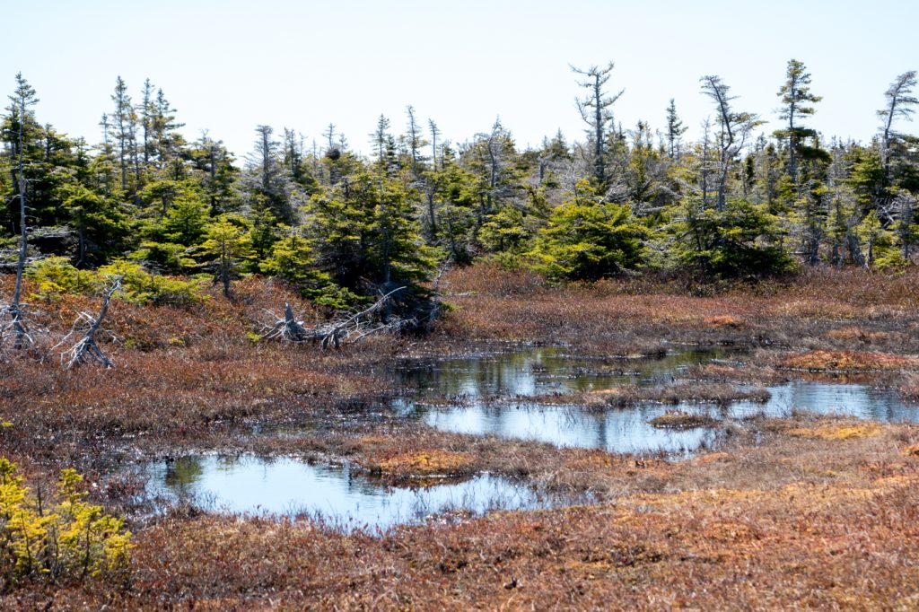Marsh where to hike in the Maggies archipelago, Quebec, Canada